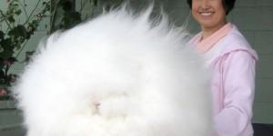 Самый пушистый кролик в мире