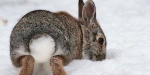 Зачем кролику, зайцу нужен хвост