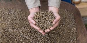 Кроличий навоз для огорода как удобрение: польза и как использовать