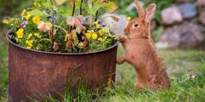 Могут ли кролики есть траву во дворе?