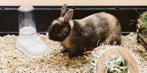 Почему кролик пьет много воды