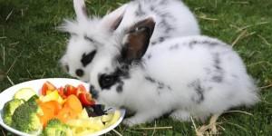 Можно ли кроликам есть насекомых