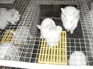 ЛПХ Зимовниковский Кролик
