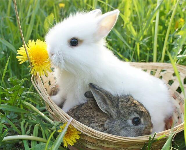 Сколько живут декоративные кролики