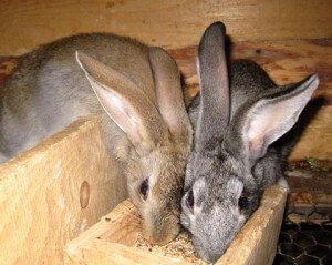 Внимание!Опасно для жизни кроликов!!! - Страница 3 IMG_0065-300x239