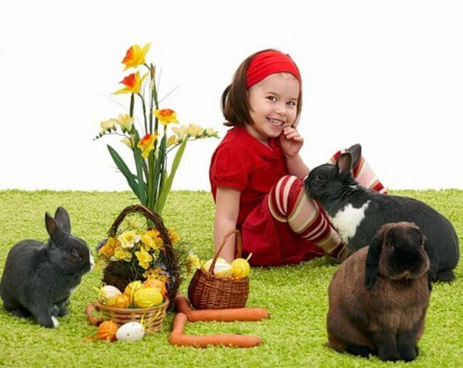 Где купить декоративного кролика