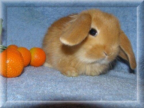Имена для декоративных кроликов - как назвать кролика