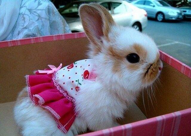 Декоративный кролик как подарок