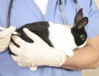 Вакцина кроликов от миксоматоза и ВГБК