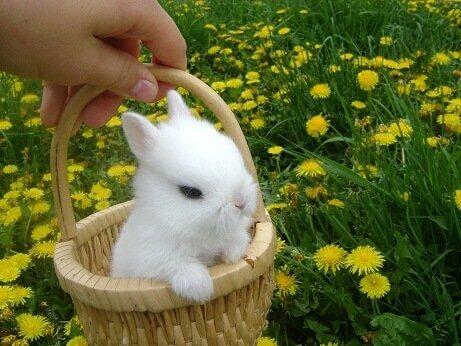 Блохи, клещи, власоеды у кроликов