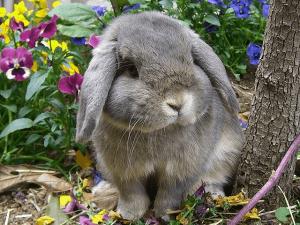 Характер и поведение декоративных кроликов
