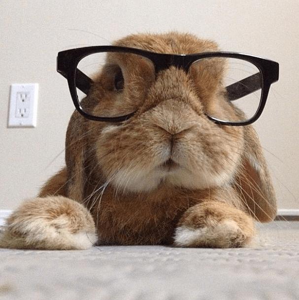Что и как видят кролики