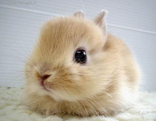 Какие органы чувств у кролика