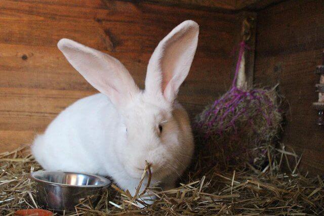 Вредна ли пыль для кроликов