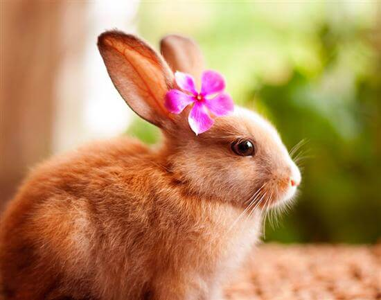 Биологические особенности кроликов