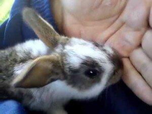 Кролик лижет ноги