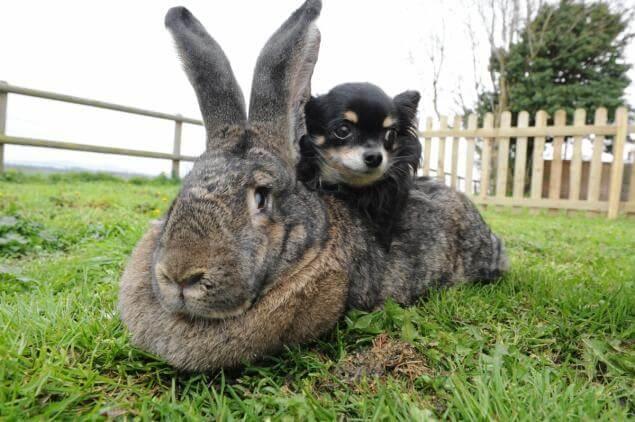 Почему у зайца, кролика длинные уши