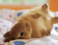 Переломы и травмы у декоративных кроликов