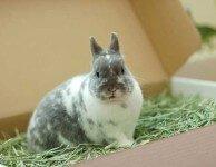 Сено для декоративных кроликов