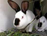 Витамины и минералы для кроликов