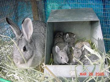 Гнездовой ящик для кроликов