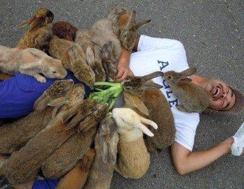 Остров кроликов в Японии.
