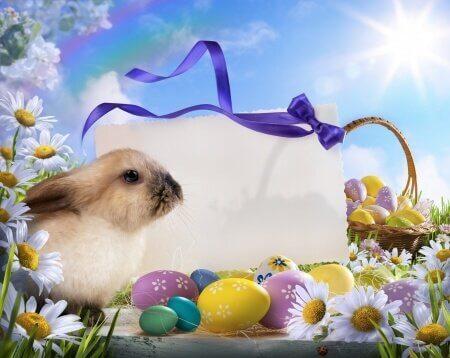 Пасхальный кролик фото