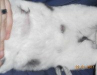 Мастит у крольчихи