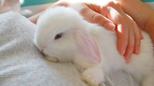 Купить декоративного кролика в Москве