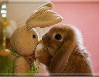 Приют для кроликов