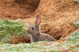 Где живут дикие кролики в природе