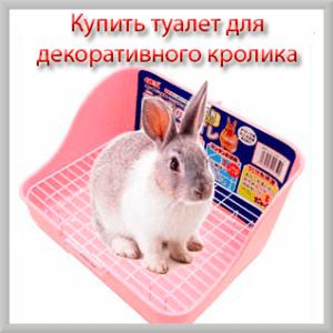 Купить туалет для декоративного кролика
