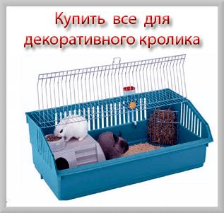 Купить все для декоративного кролика