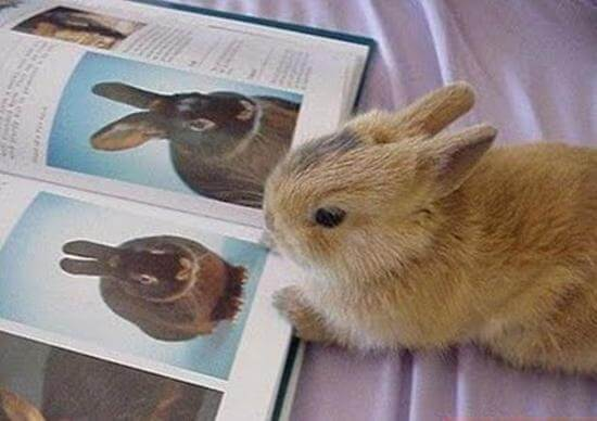 Кролики из книги рекордов гиннеса