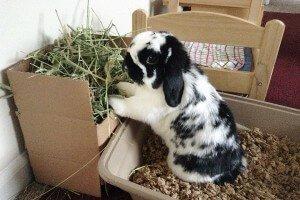 Сенник для кролика своими руками