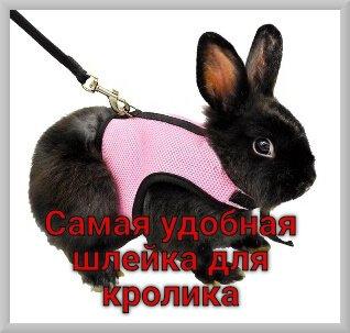 Самая удобная шлейка для кролика