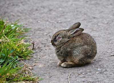 Колибактериоз у кроликов симптомы, лечение