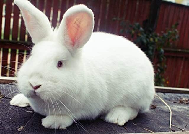 Описание проекта кфх кролик