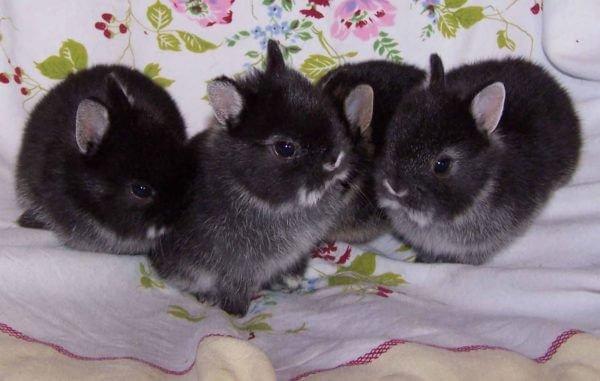 Хочу купить декоративного кролика, но ничего не знаю о них