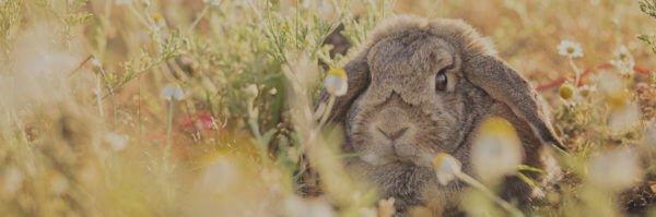 Куда отдать кролика если надоел