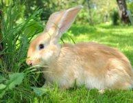 Корма для кроликов - производителей в период покоя
