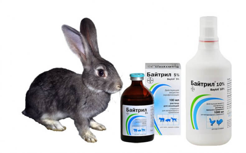Байтрил для кроликов инструкция по применению