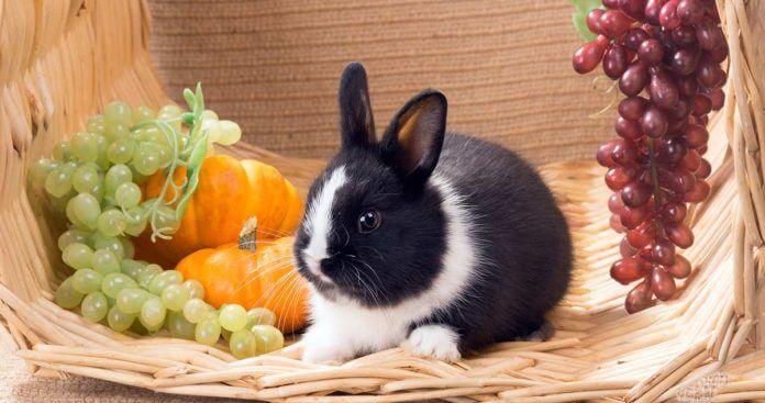 Можно ли декоративным кроликам виноград