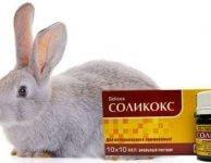 Соликокс для кроликов инструкция по применению