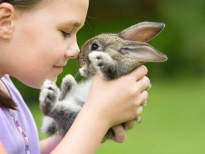 Декоративные кролики и коронавирус (covid-19)