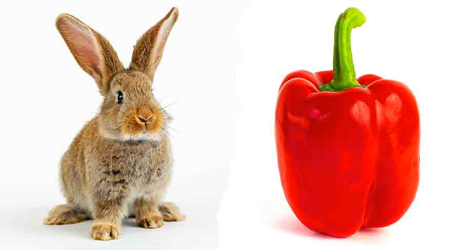 можно ли кроликам давать перец