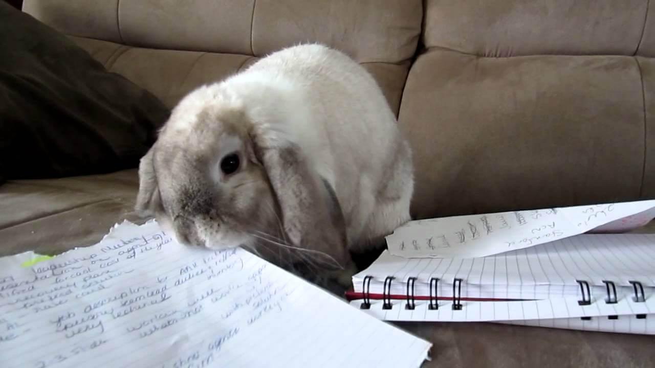 можно ли кроликам есть бумагу