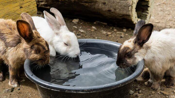 Как спасти кроликов от жары