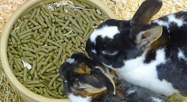 что делать если кролик не ест корм