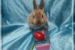 5.Девочка  (карликовый рекс) 01.09.20г.р-6.500руб Окрас: красный. Самые плюшевые кролики